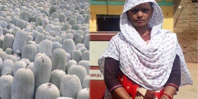 News Of Amar Ujala Related To Farming – Exclusive: मायके का हुनर ससुराल में आजमाया, कुम्हड़े की खेती से कमाल कर दिखाया
