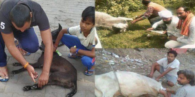 Animal Lovers Story In Jalaun Up – किसी का दर्द मिल सके तो ले उधार…, पशुओं के प्रति अनूठा है इनका प्रेम, ऐसे कर रहे सेवा
